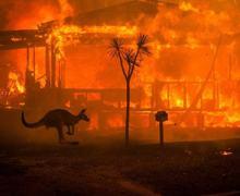 Bushfires Photograph