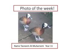 Ducks  Tasneem Al Muharrami